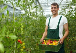 Organic Farming Business Idea in Bangladesh