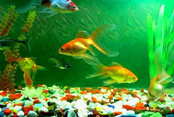 7Ps of Aquarium Business for Dhaka City